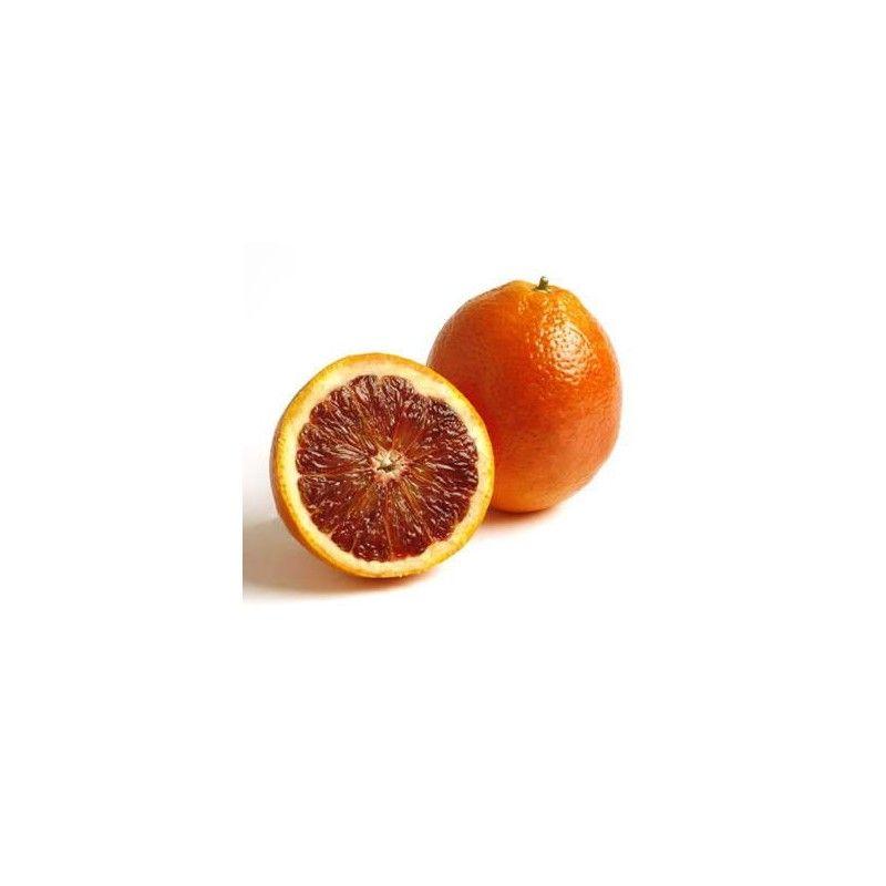 Arancio Tarocco (Citrus sinensis)