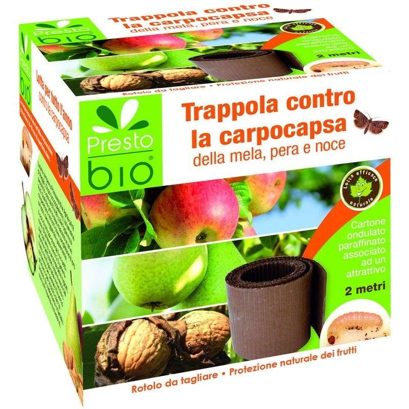 Trappola a fascia per lotta contro la carpocapsa di mela, pera e noce