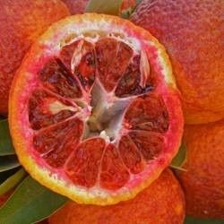 Clementine Amoa 8