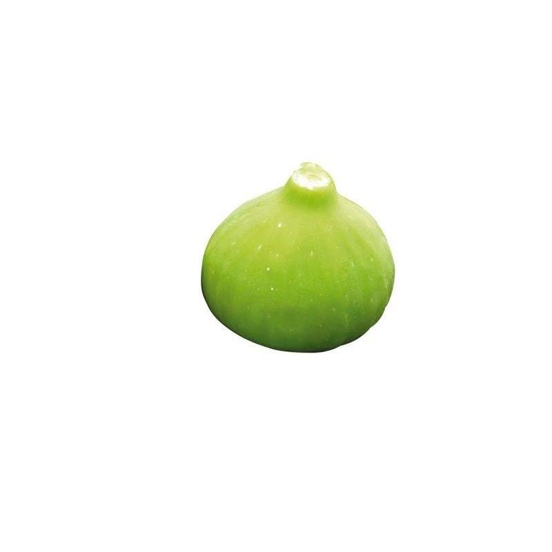 Fico Brogiotto Bianco (Ficus Carica)