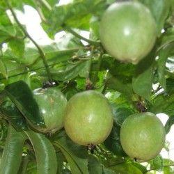 Maracuja (Frutto della passione)