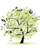 Piante da giardino Vendita Online