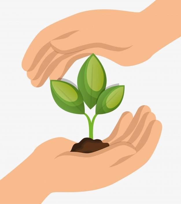Garantiamo al 100% piante imballate con la MASSIMA CURA. (Clicca l'icona)